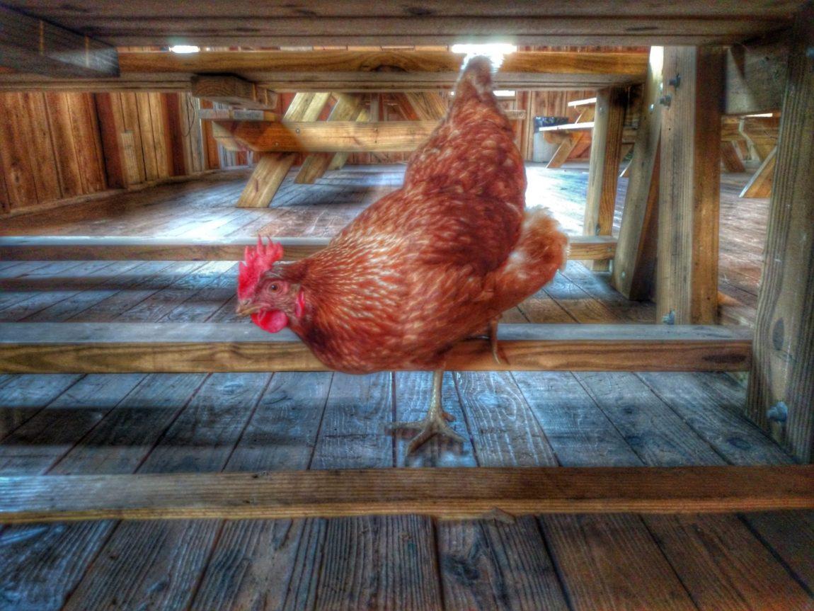 Fun, Cheap, and Easy Ideas to Do With Your Kids Today- Braehead Farm – Fredericksburg, VA